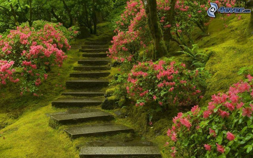 escalera, flores de color rosa, verde