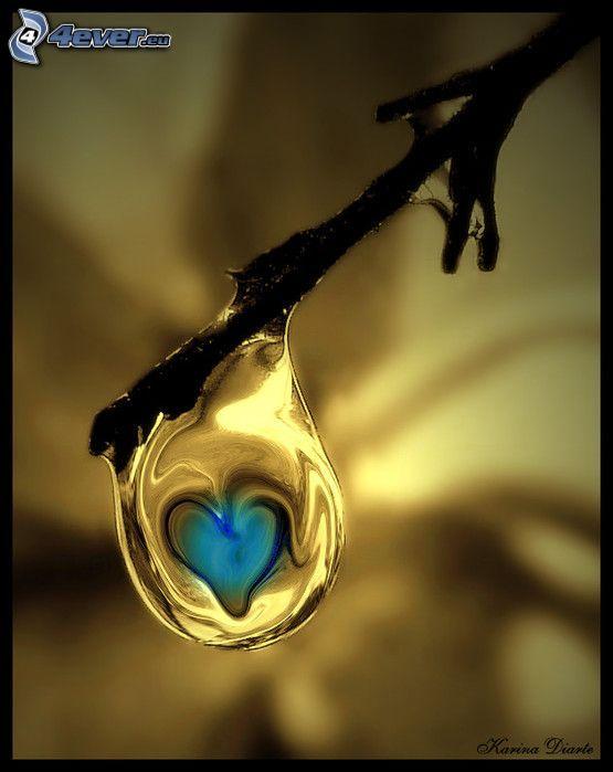 gota, ramita, naturaleza, corazón