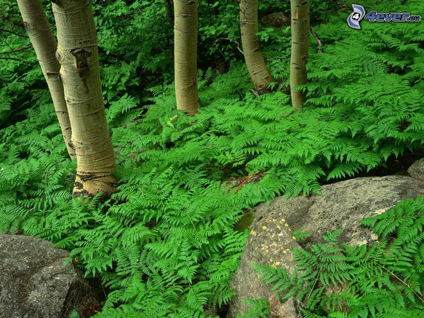 helechos, árboles, rocas