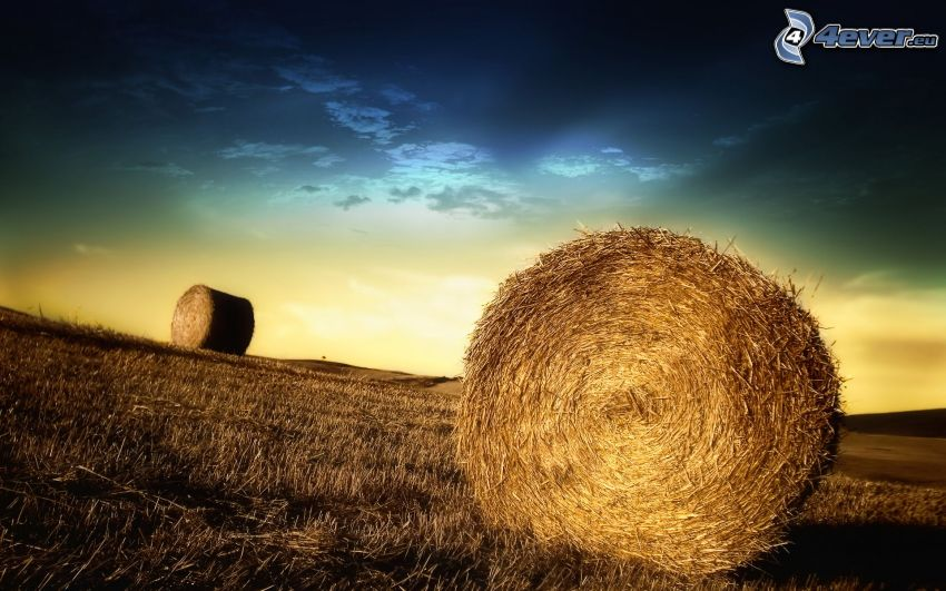 heno después de la cosecha, campo