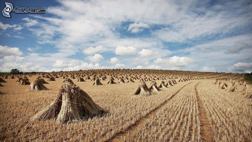 heno después de la cosecha, nubes