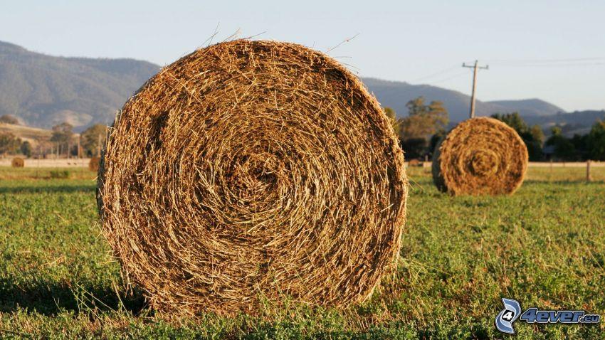 heno después de la cosecha