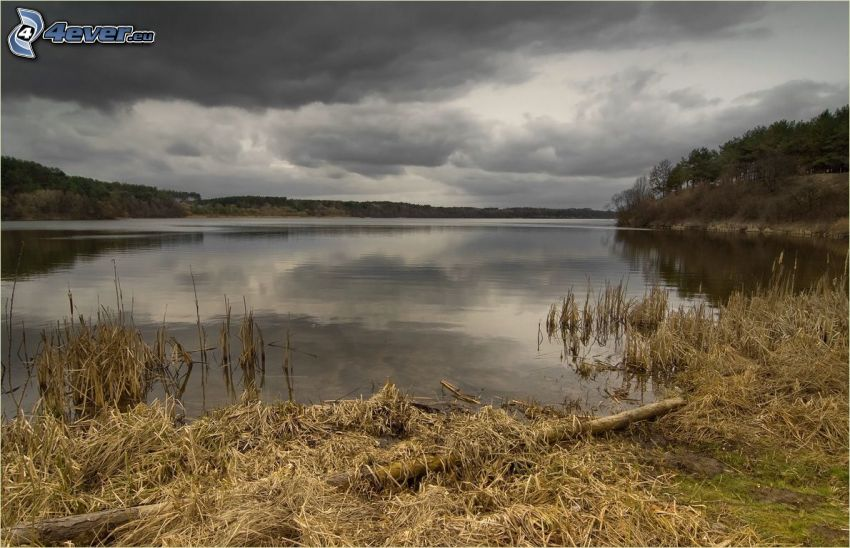 hierba en la orilla de un lago, hierba seca, nubes