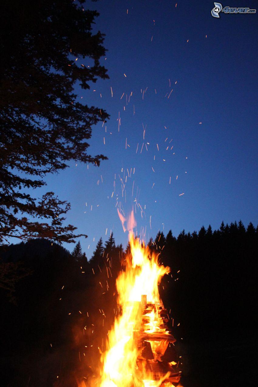 hoguera, fuego, chispazo, silueta de un bosque