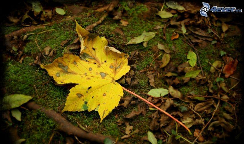 hoja amarilla, hojas de otoño