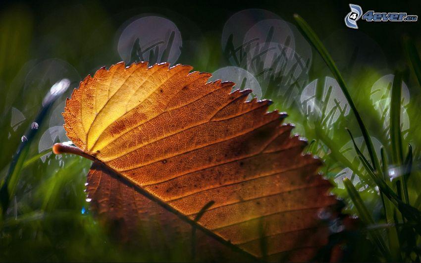 hoja de otoño, hierba