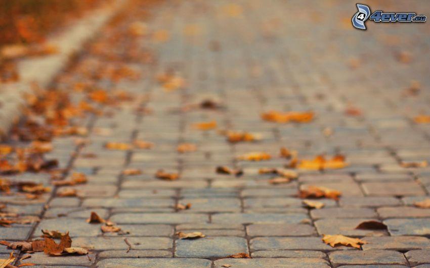 hojas caídas, pavimento