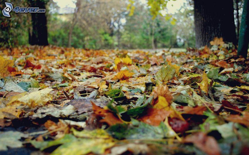 hojas de otoño, árboles