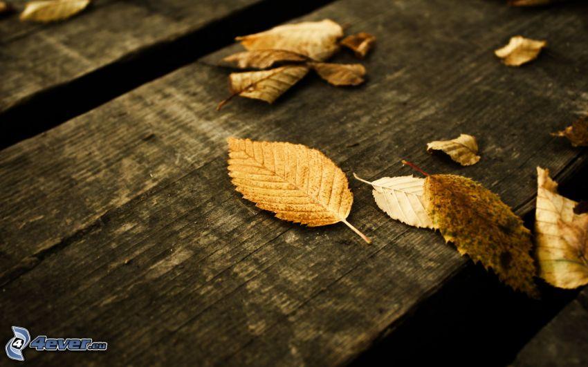hojas secas, madera