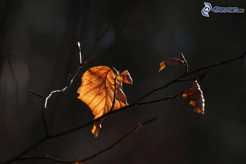 hojas secas, ramita