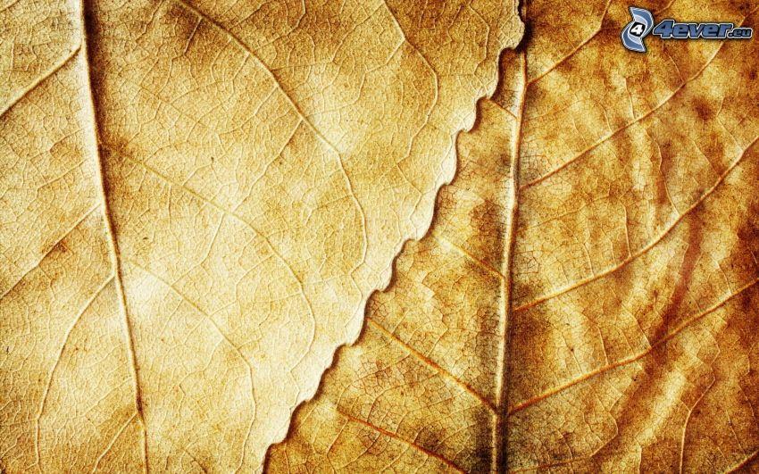 hojas secas