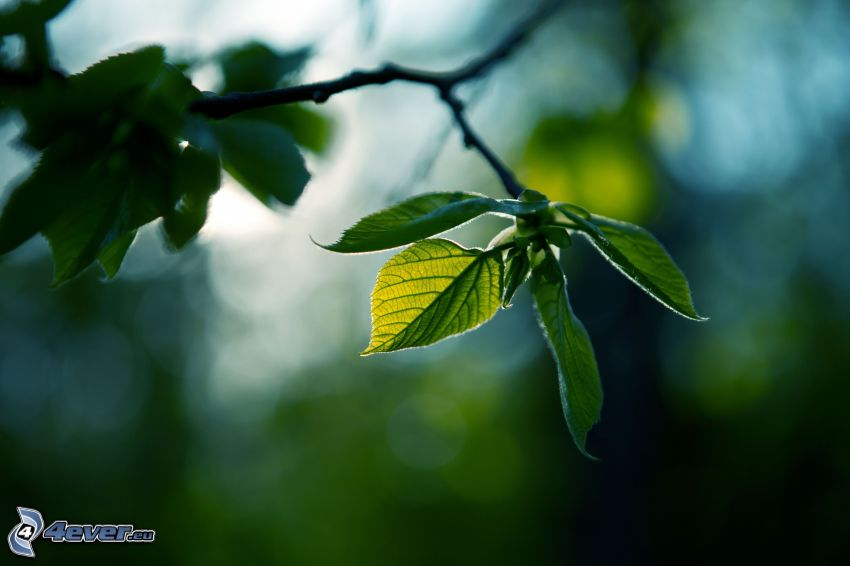 hojas verdes en una rama