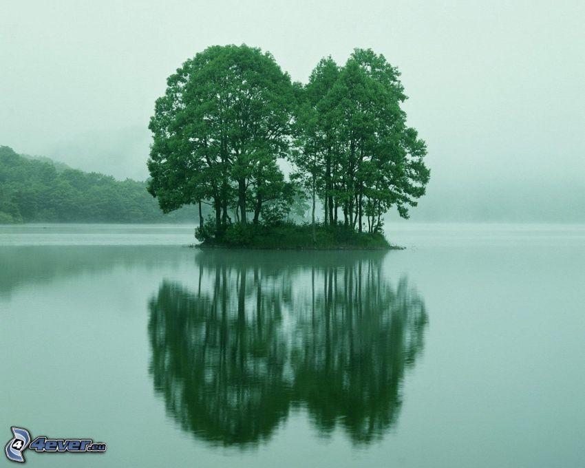 isla, árboles, lago