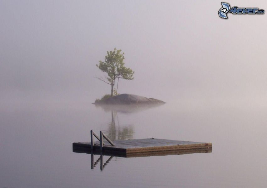isleta, árbol, muelle de madera, agua, niebla