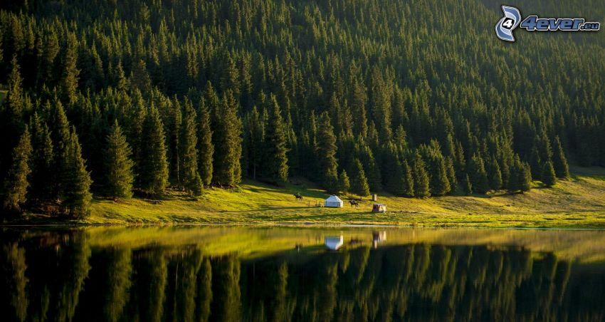 Kolsai Lakes, bosques de coníferas