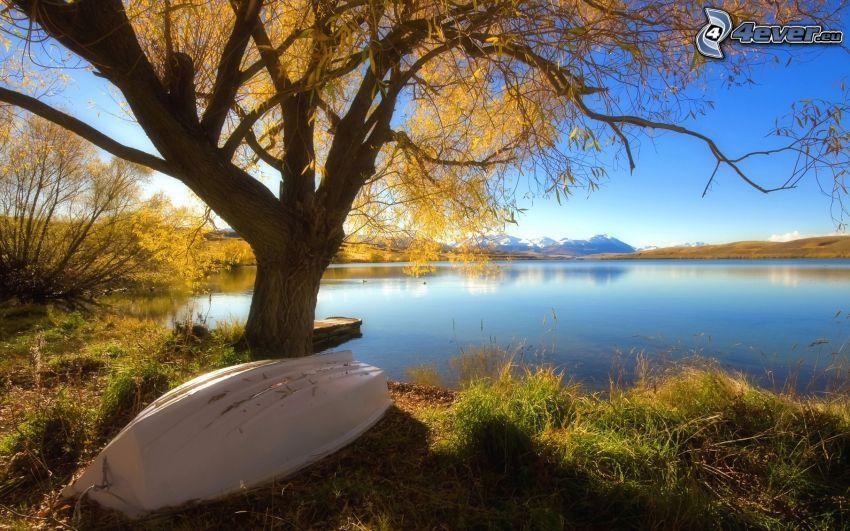 lago, árbol, barco