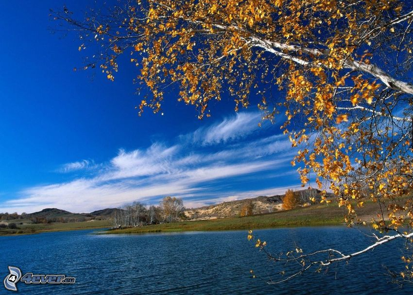 lago, árbol amarillo