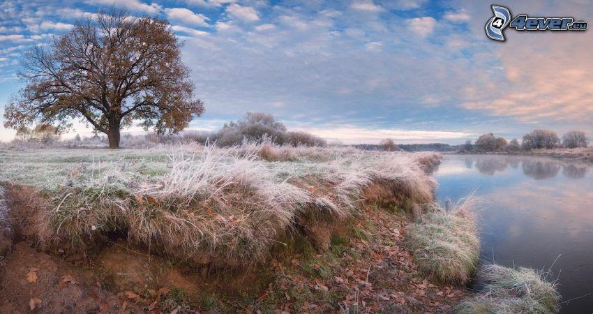 lago, árbol otoñal