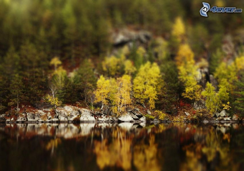 lago, árboles, diorama