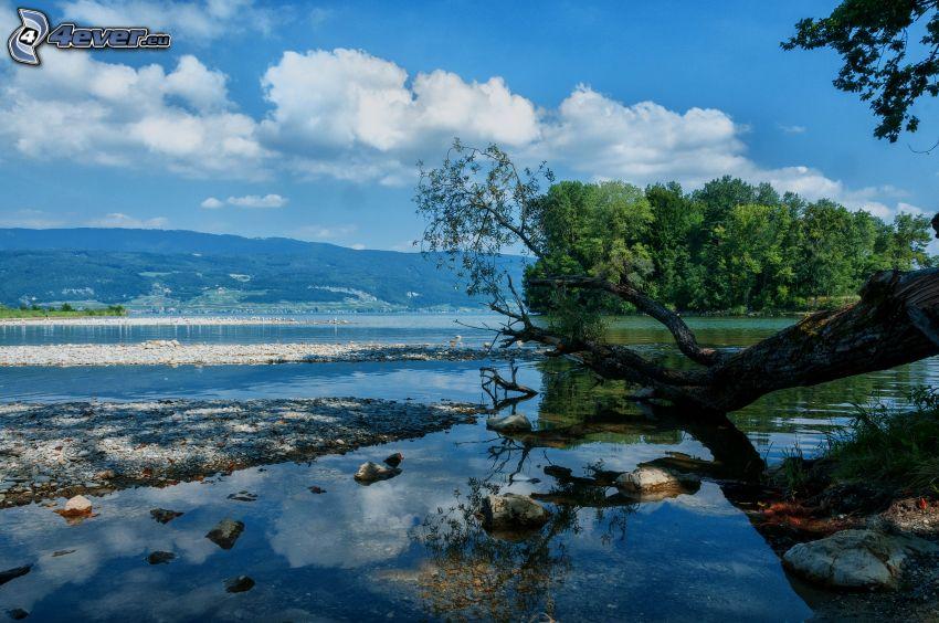 lago, árboles, sierra, orilla