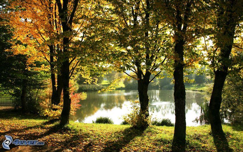 lago, árboles otoñales