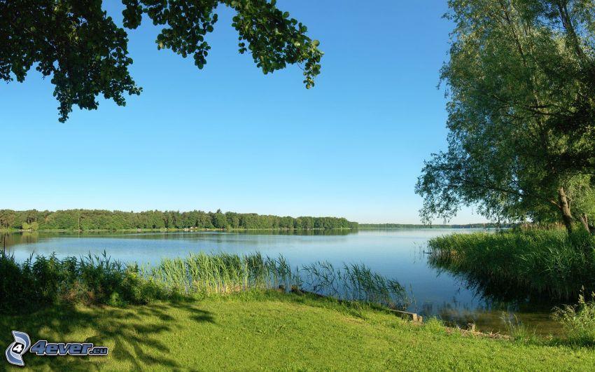 lago, bosque, árboles