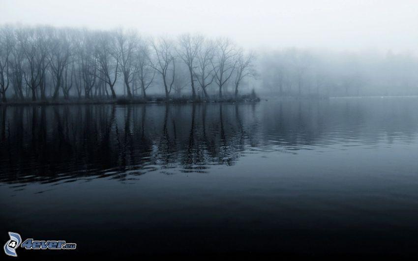 lago, bosque, niebla