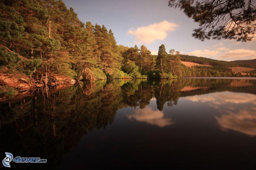 lago, bosque