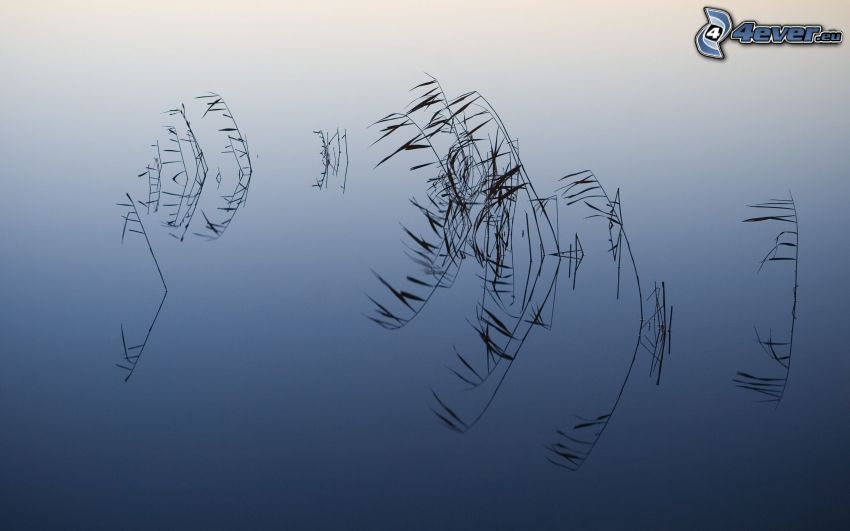 lago, hierba, reflejo