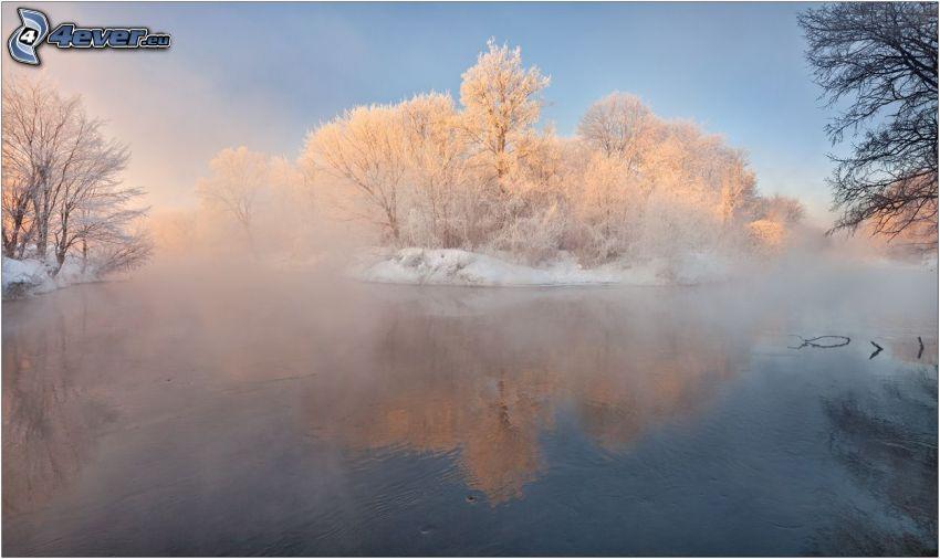 lago, niebla baja, árboles nevados