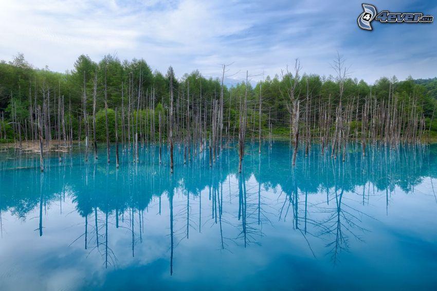 lago azul, árboles secos