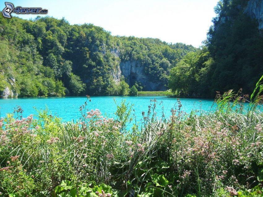 lago azul, rocas, flores de campo