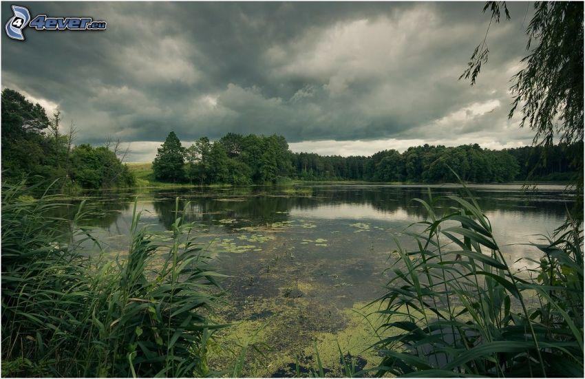 Lago en el bosque, verde, nubes