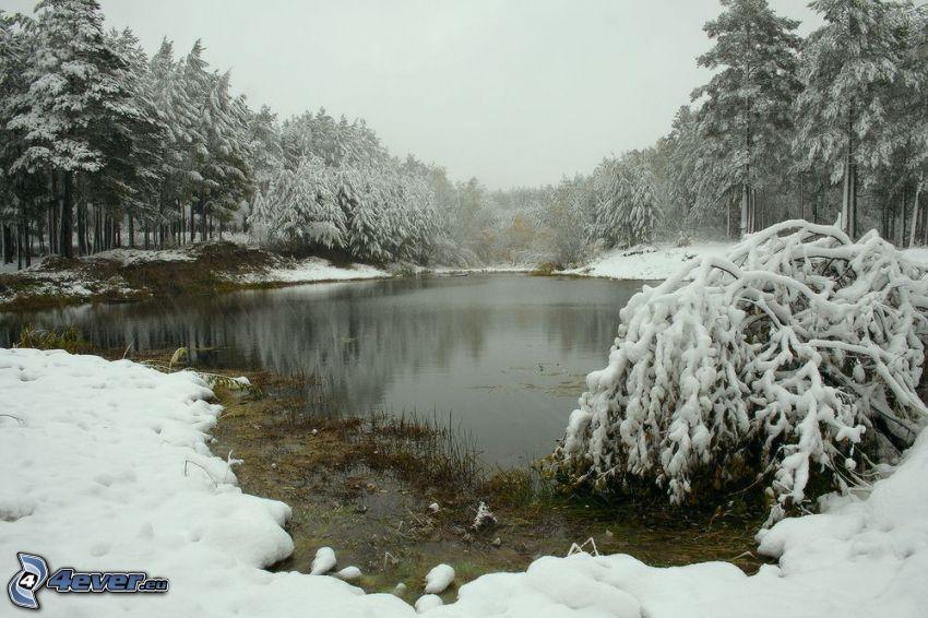 lago en un bosque, árboles nevados