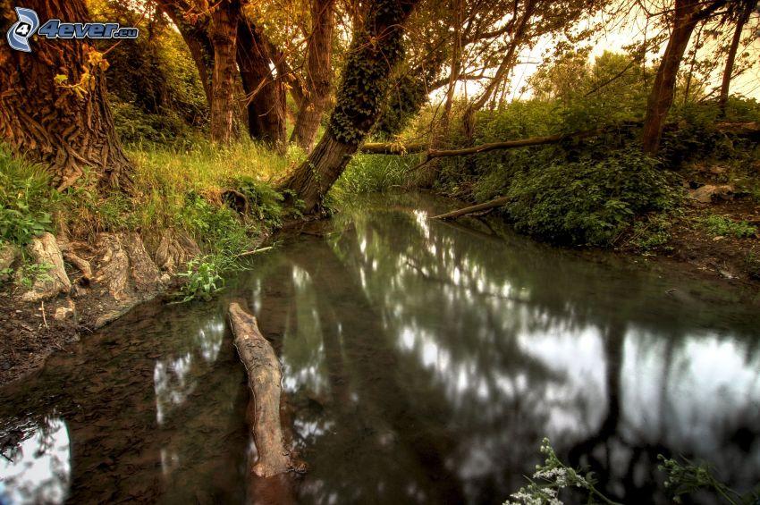 lago en un bosque, HDR