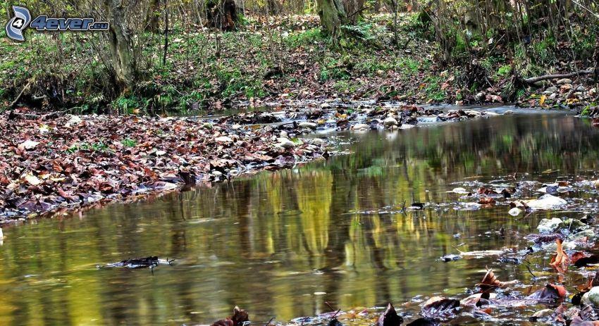 lago en un bosque, riachuelo, hojas de otoño