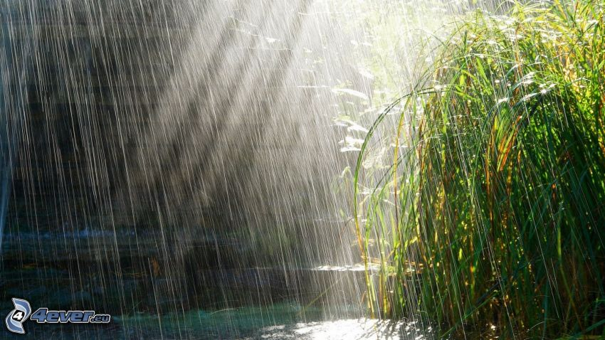 lluvia, plantas