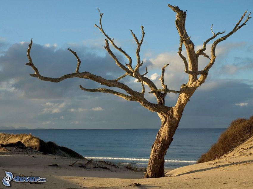 árbol seco, playa, árbol solitario
