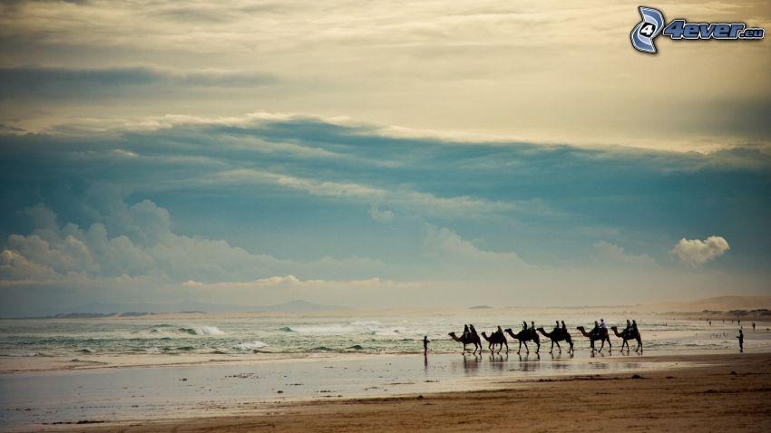 beduinos en camello, mar, playa de arena