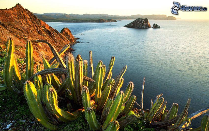 cactuses, costa, roca en el mar, mar