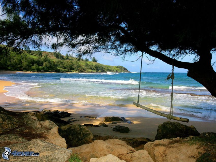 columpio, costa, mar, árbol