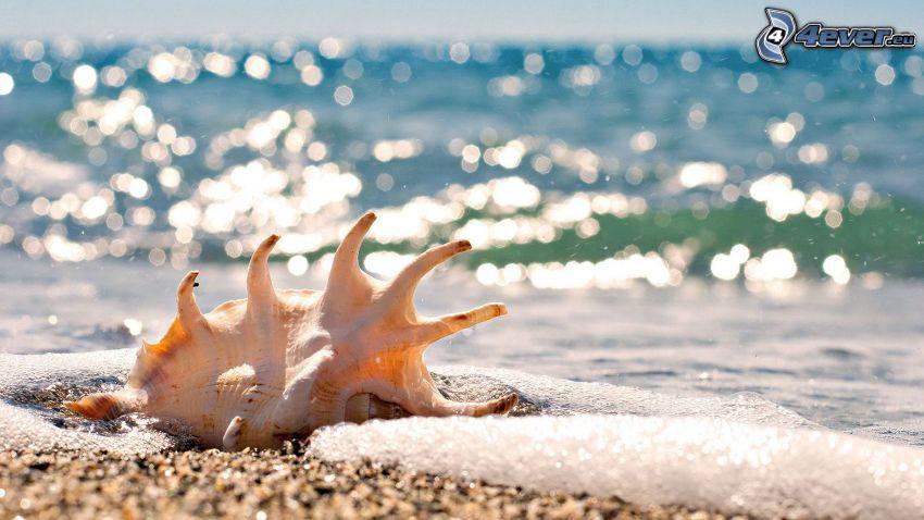 concha, mar, playa