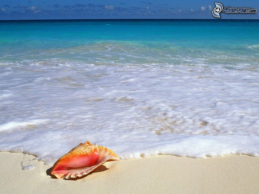 concha en la playa, mar, agua, ola