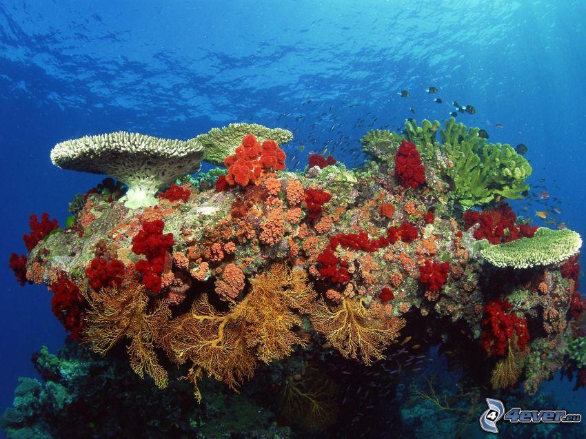 corales marinos, mar, peces