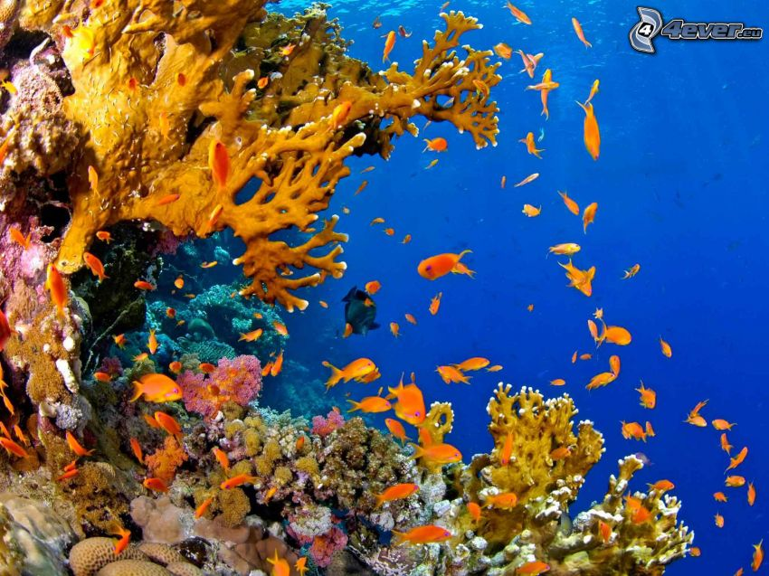 corales marinos, pez coral