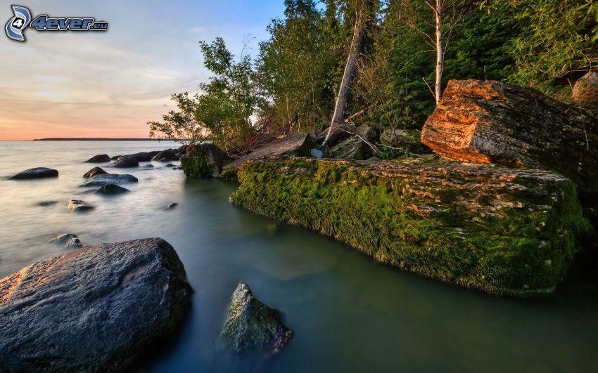 costa rocosa, bosque, mar