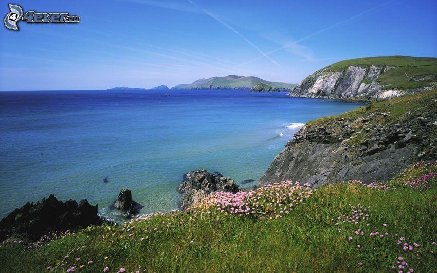 costa rocosa de Irlanda, flores, mar