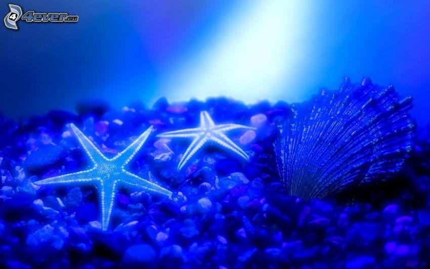 fondo del mar, estrellas de mar, concha, piedras