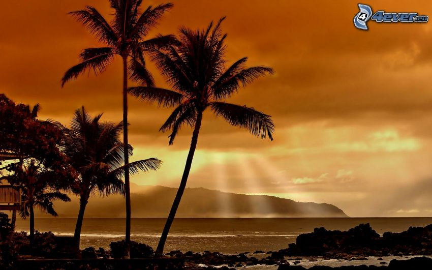 Hawai, palmeras en la playa, rayos de sol, salida del sol, mar