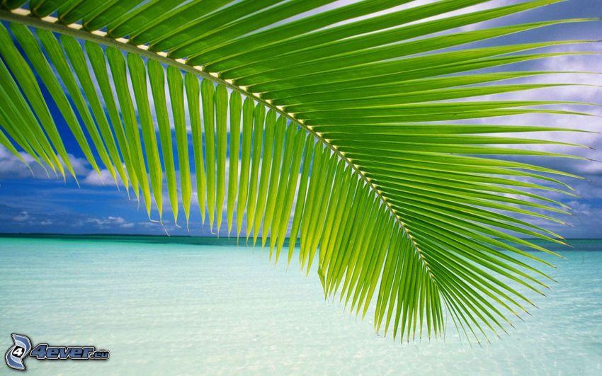 hoja de palmera, el mar azul